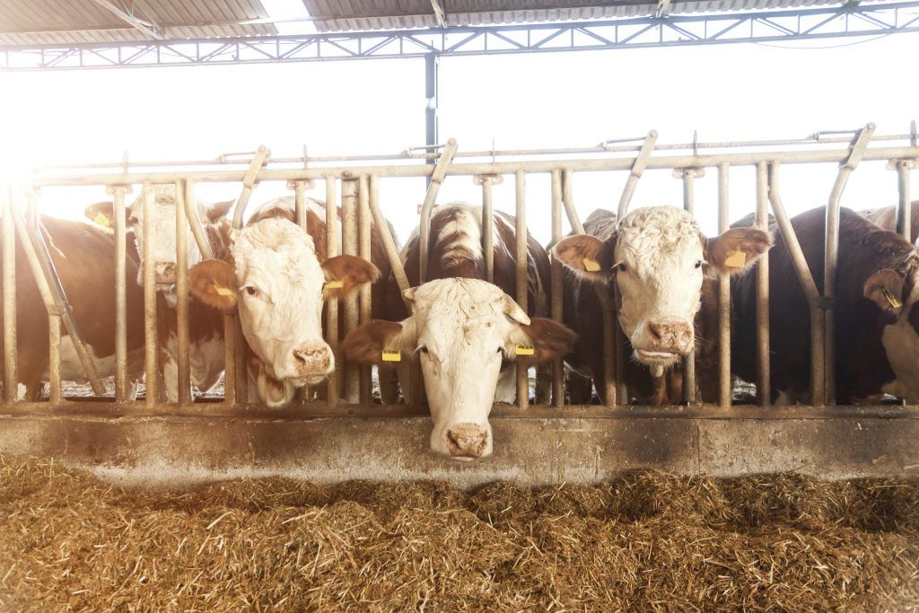 Exploring the potential of the agricultural market